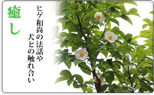 iyashi6